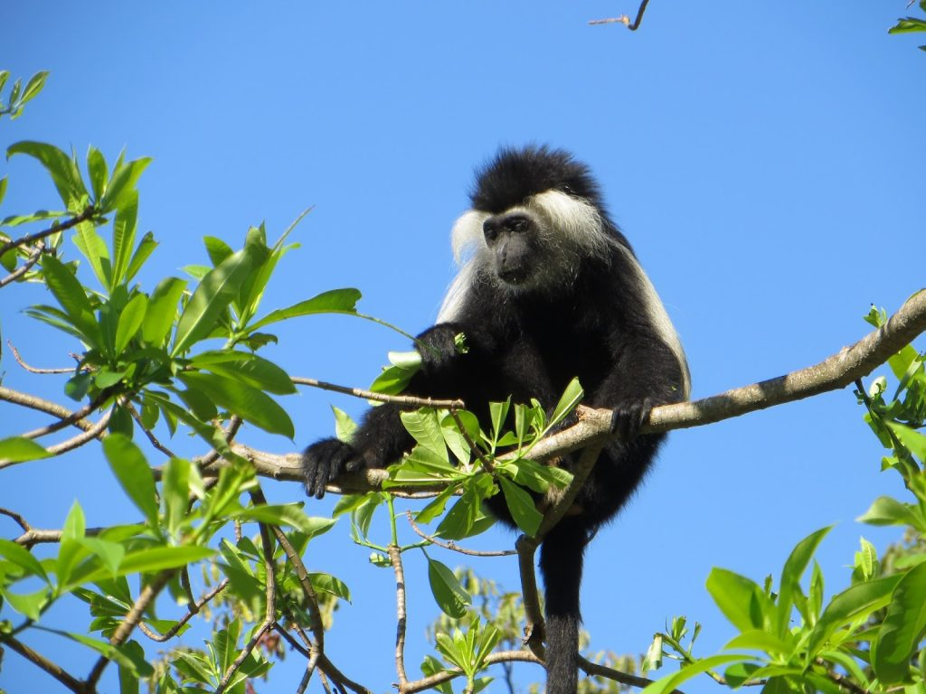 03-udzungwa-mountain-national-park-tanzania